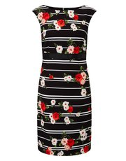 Precis Petite stripe and floral dress