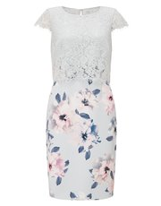 Precis Petite print and lace dress