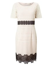 Precis Petite Lara lace dress